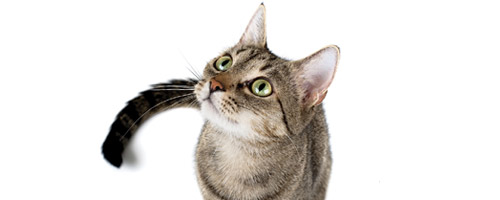 catsmall